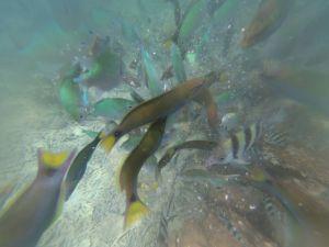 Ikan beraneka warna